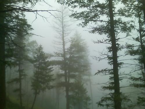 treesfog